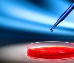 Промислова біотехнологія